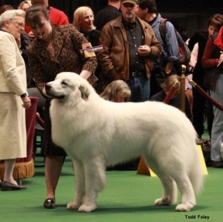 MBIS MBISS Am Ch Can GCh Pyrview's Solan Warrior King, HOF - Solan